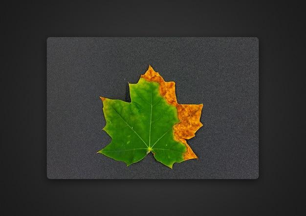 Кленовый лист на сером столе