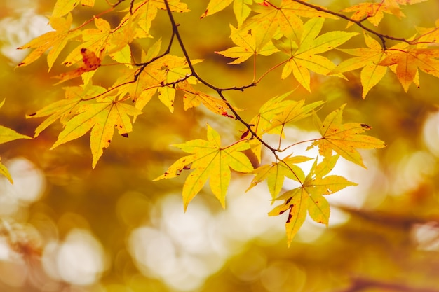Maple leaf, tree branch in beautiful autumn