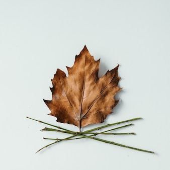 Maple leaf and twigs in shape of camp fire on white wall. flat lay