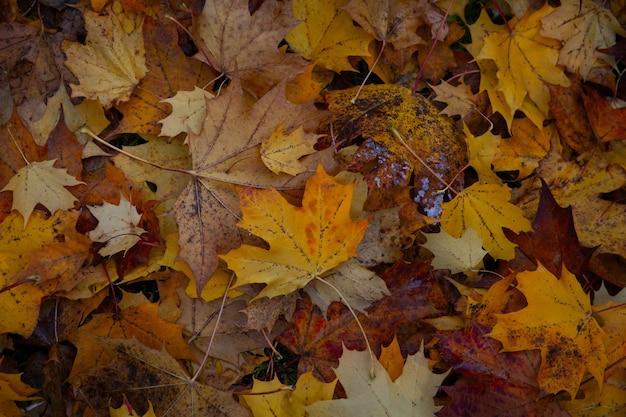 지상에 단풍 잎