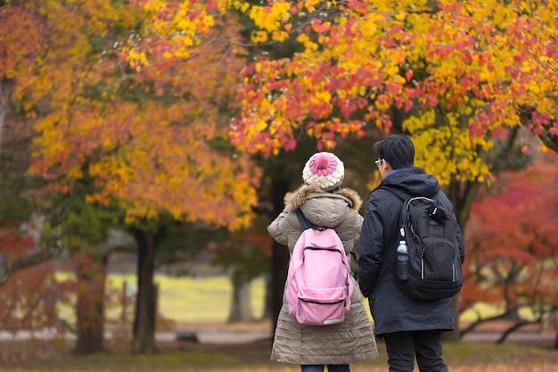 Maple tree in autumn.