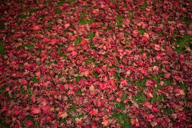 단풍 나무 잎이 잔디에 떨어졌다