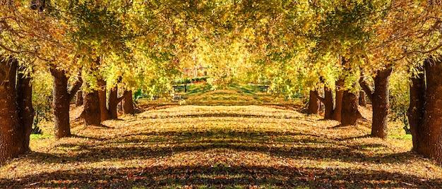 Maple tree tunnel