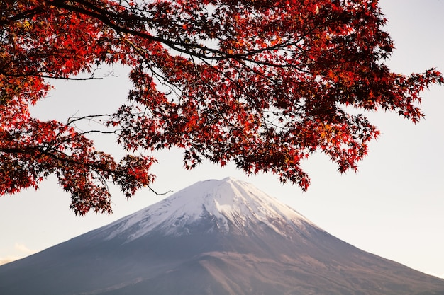 Maple tree with red leaves under the sunlight with a mountain covered in the snow