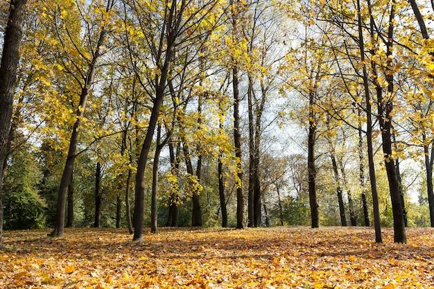 秋の紅葉とともに公園に生えているカエデの木。晴天時にクローズアップで撮影した写真。