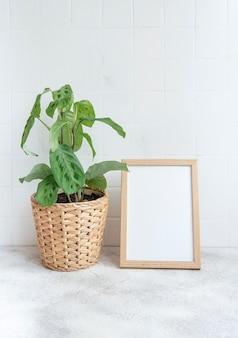 Maranta leuconeura kerchoveana in pot on the table and mock up poster frame