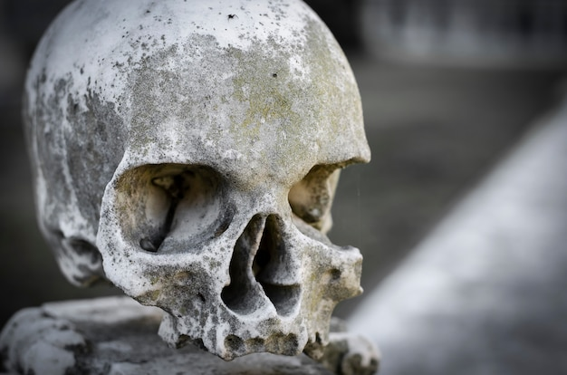 Marble skull. copy space. close-up portrait