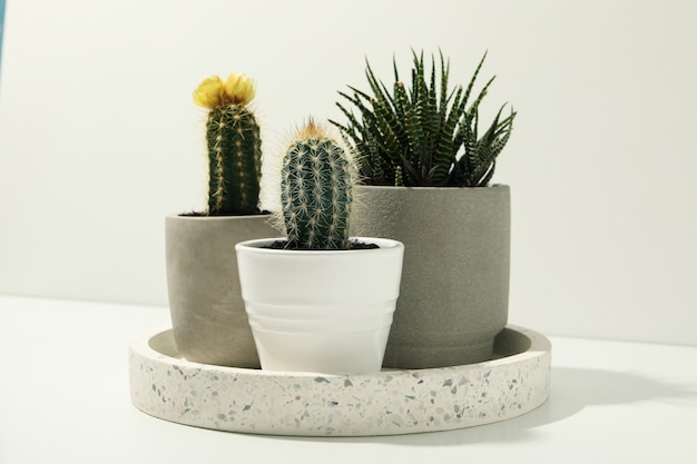 Marble tray with succulent plants on white surface. houseplants