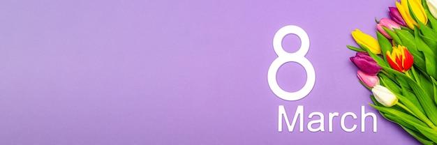 3월 8일, 세계 여성의 날. 보라색 배경에 튤립, 텍스트에 대 한 장소. 광고, 엽서, 축하에 적합합니다.