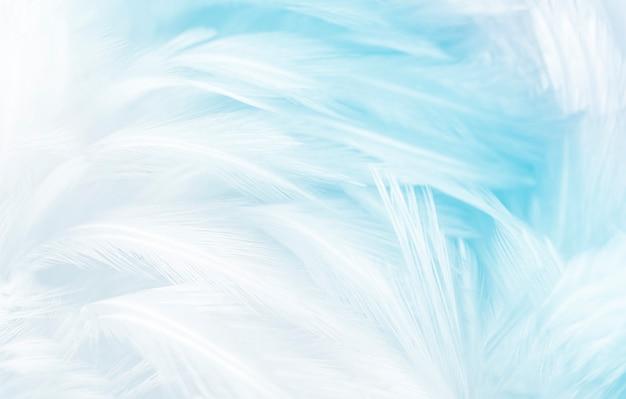 柔らかさの白い羽のマルクロ写真