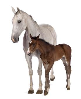 馬と子馬立って
