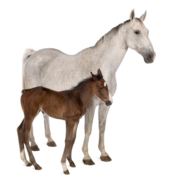 Mare and her foal standing