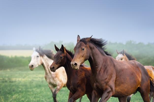 野原で子馬を駆ける牝馬。 3頭の馬のクローズアップ。群れ無料