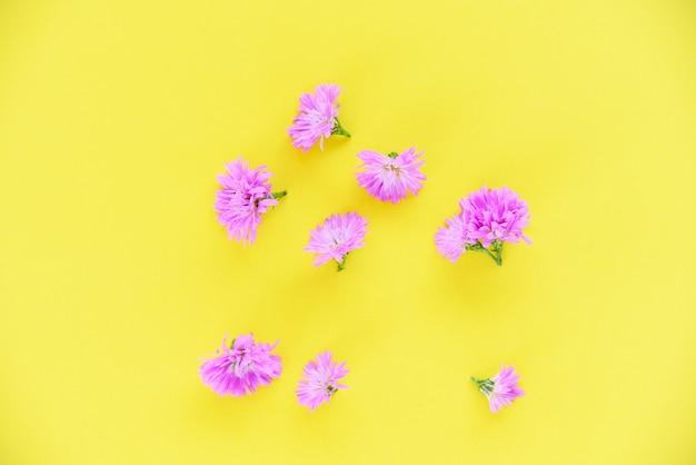 Marguerite purple flower on pink