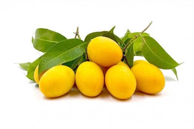 Marian plum or plango isolated on white background.