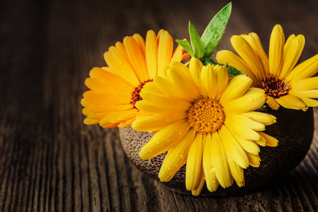 Marigold (calendula) flowers in a bowl on wooden rustic background