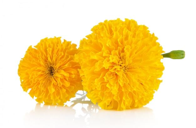 分離されたマリーゴールドの花