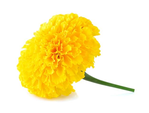 화이트에 금 잔 화 꽃