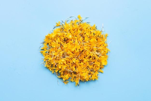 Marigold flower petals on blue background.