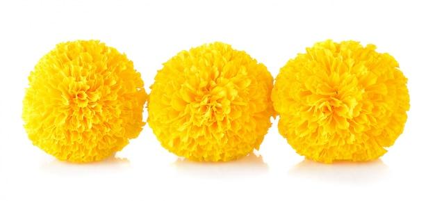 Marigold flower on white