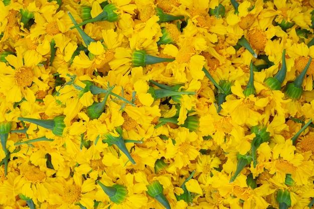 マリーゴールドの花のカラフルな背景