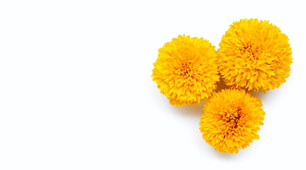 Marigold flowers on white. copy space