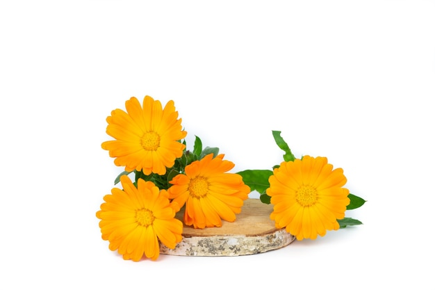 Marigold flowers with leaves on birch wood and yellow background. copy space. top view.