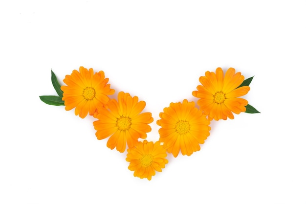 Marigold flowers with leaves on yellow surface. copy space. top view.