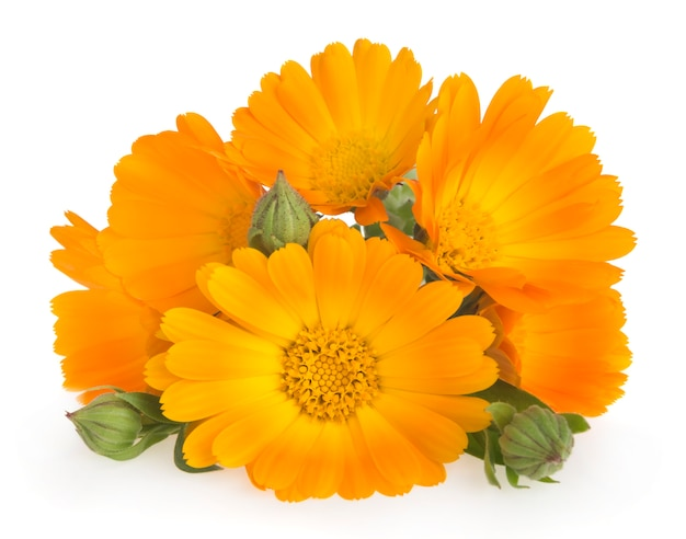 Marigold flowers with leaves