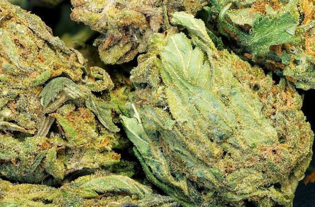 Крупный план текстуры предпосылки марихуаны. натуральное фото макроса.