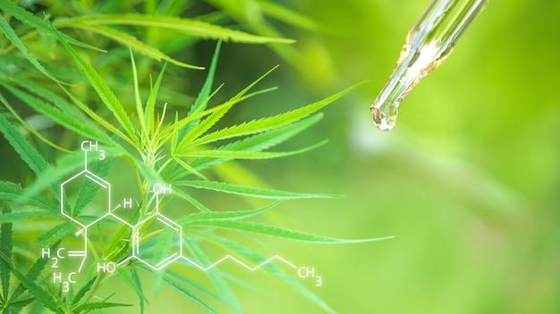 マリファナ。大麻cbdオイルは瓶のハーブと葉に抽出されます。コンセプト医療用マリファナ。