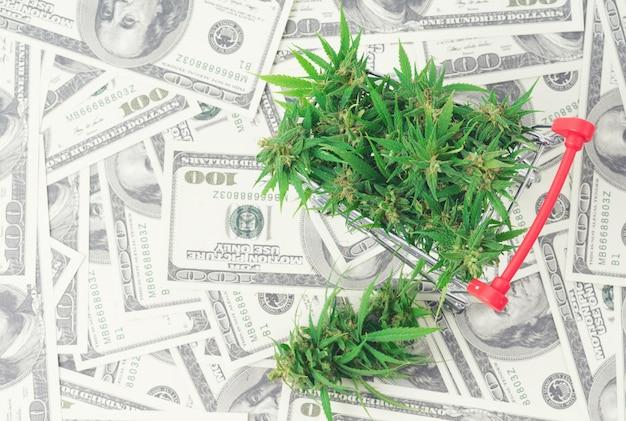 Marijuana flower on hundred dollar banknote
