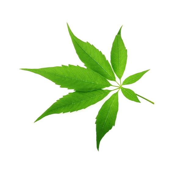 分離されたマリファナの葉