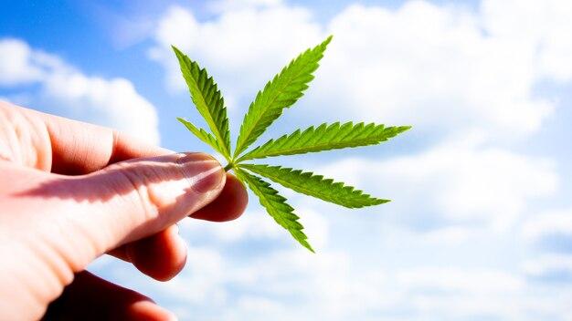 마리화나는 손에 나뭇잎. 하늘과 구름 배경입니다.