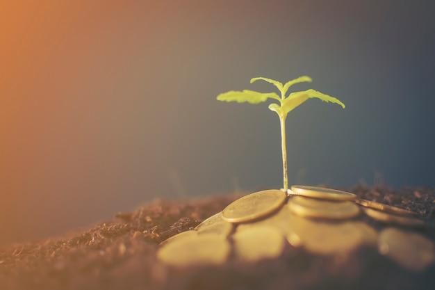Marijuana plant growing in piles of money. marijuana business concept.