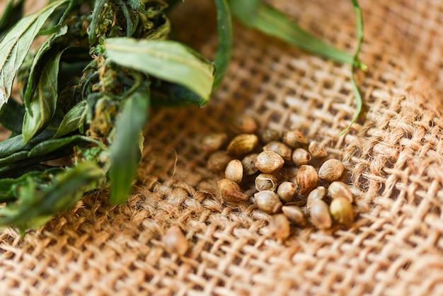Marijuana seeds and marijuana leaf on sack background / cannabis seeds hemp medical