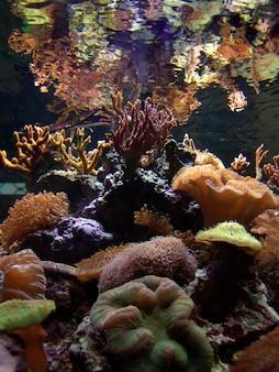 Морское дно аквариума с кораллами.