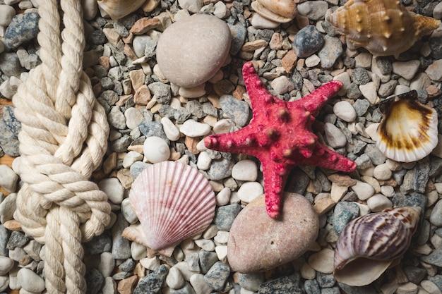 海岸に横たわっているロープと貝殻と海の背景