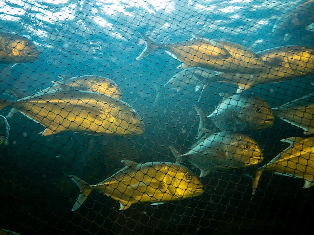 Marine fish caught in the net.
