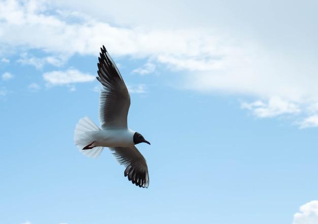 Морской пейзаж с летающей черноголовой чайкой над бурным морем. чайка парит в белых и серых облаках над озером байкал