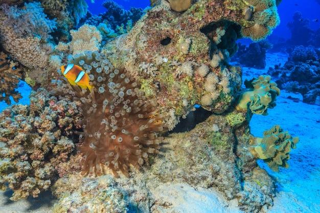 홍해 산호 근처의 해양 생물