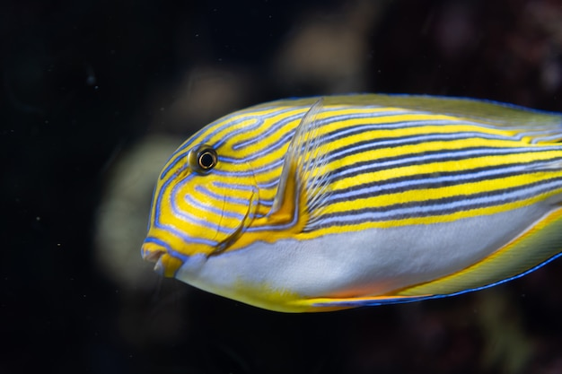 Marine life, sea fish swimming in water with an underwater environment