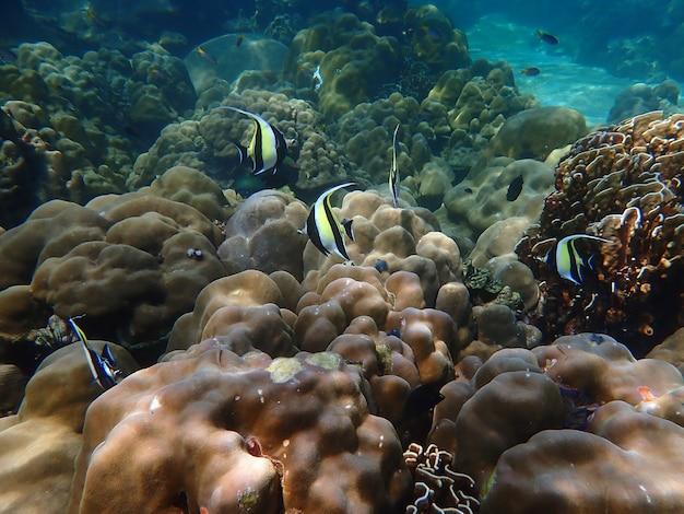 Marine life under sea water