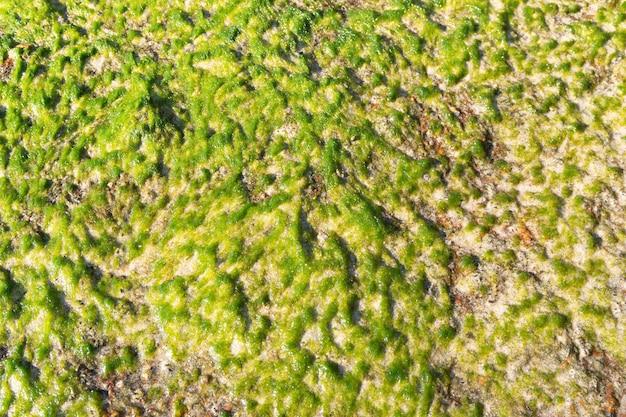 브라질 해안 바위에있는 해양 식물