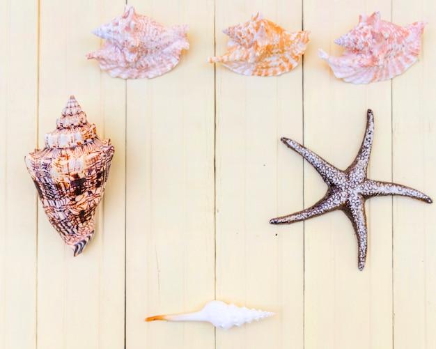 アレンジメントの海のお土産