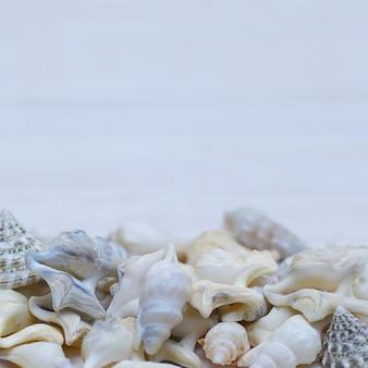 해양 빈티지 테두리-밝은 파란색 배경에 조개
