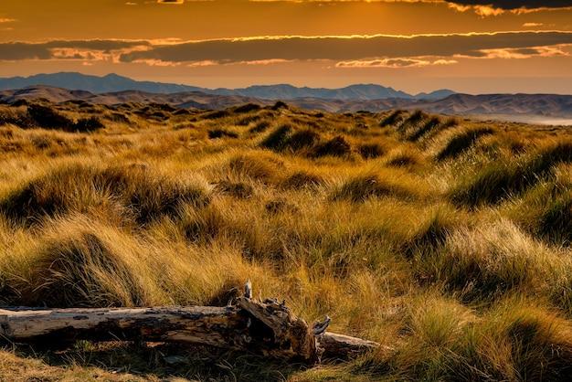 Маррам и пляжная трава, растущие на песчаных дюнах, залитых теплым солнечным светом, у побережья