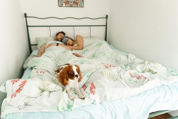 寝ている夫婦と犬がベッドに横たわっている