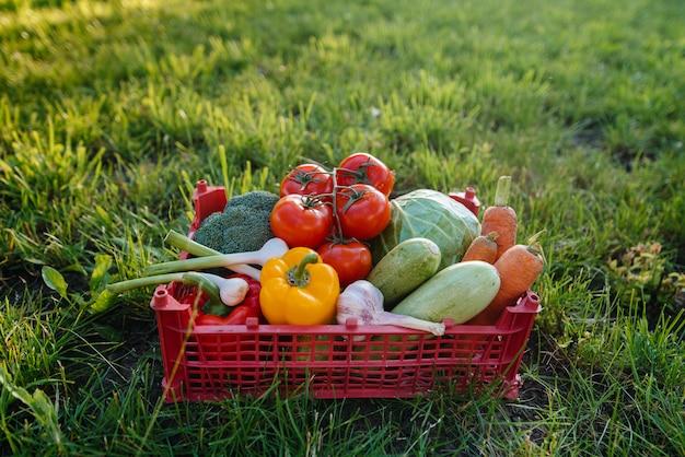 環境にやさしい庭園から採れた熟した美しい野菜が入ったマーシュボックス。