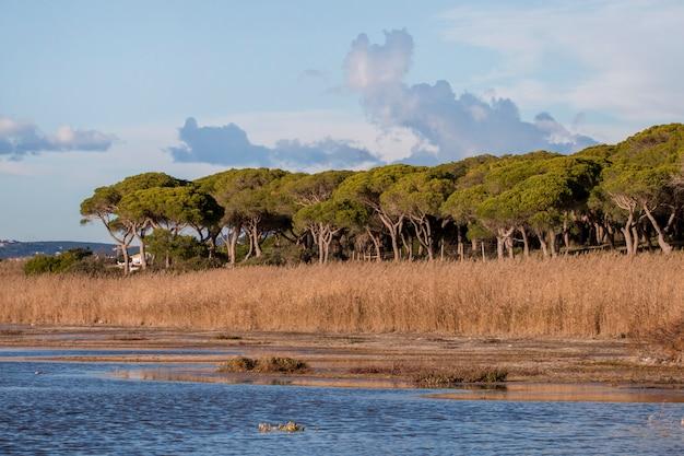 アルガルヴェ地方の湿地帯